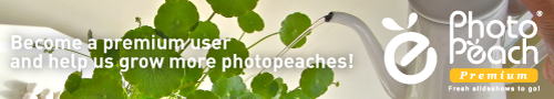 ZIEMIA on PhotoPeach - Fresh slideshows to go!